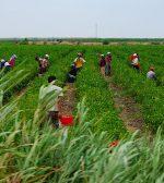 Con anuncios clave para la agroindustria, el Gobierno relanzó su relación con el campo