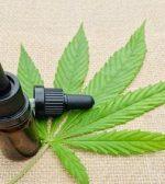 Cannabis medicinal: quiénes son las vocales a las que la Corte Suprema dijo no